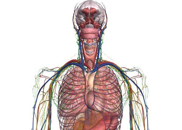 İnsan Vücudu Arama Motoru