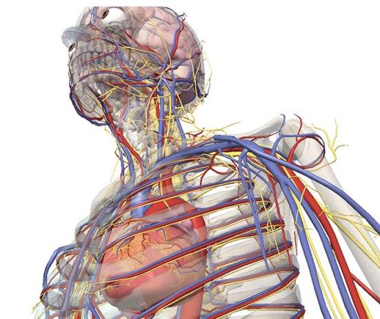 3d-visible-body-egitimteknolojinet