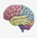 3D Beyin Uygulaması