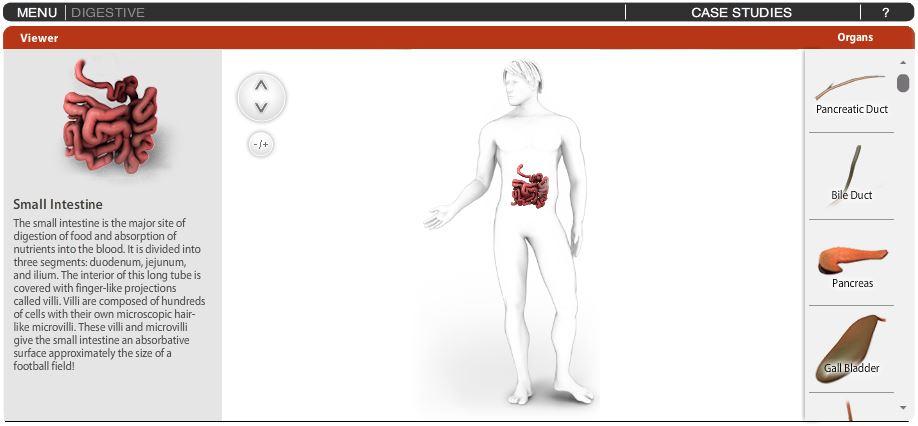 vücut-oluşturma-uygulaması