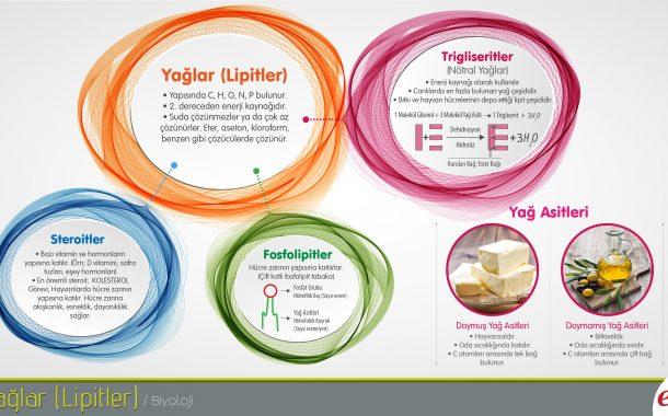 EBA İnfografikler Kullanımda